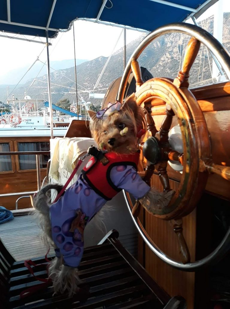 Pet Friendly Cruises