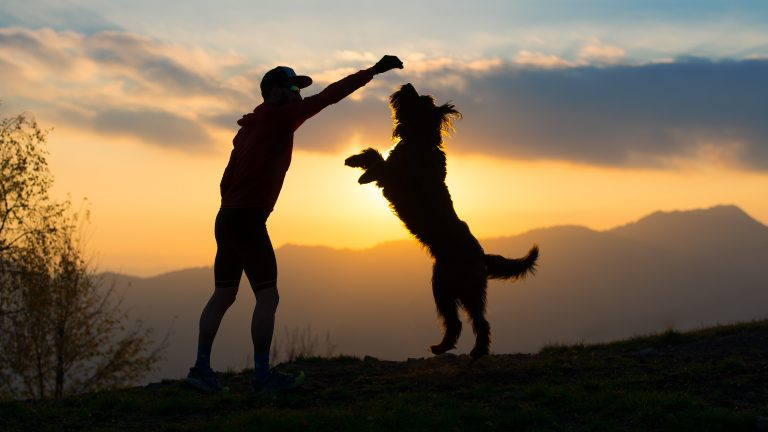 Why Does Exercising Your Dog Make Sense?