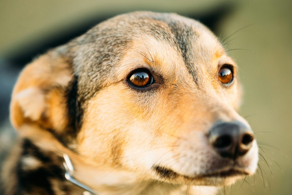 essential oils for dog anxiety