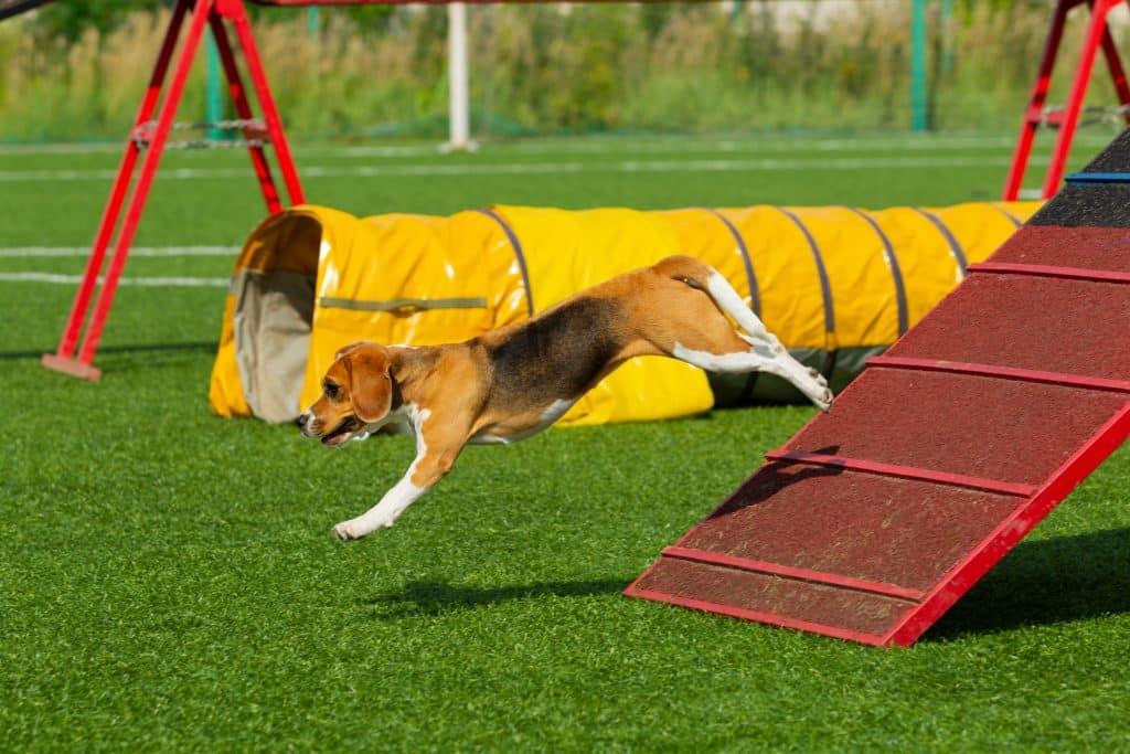 Dog Agility Training Tunnel