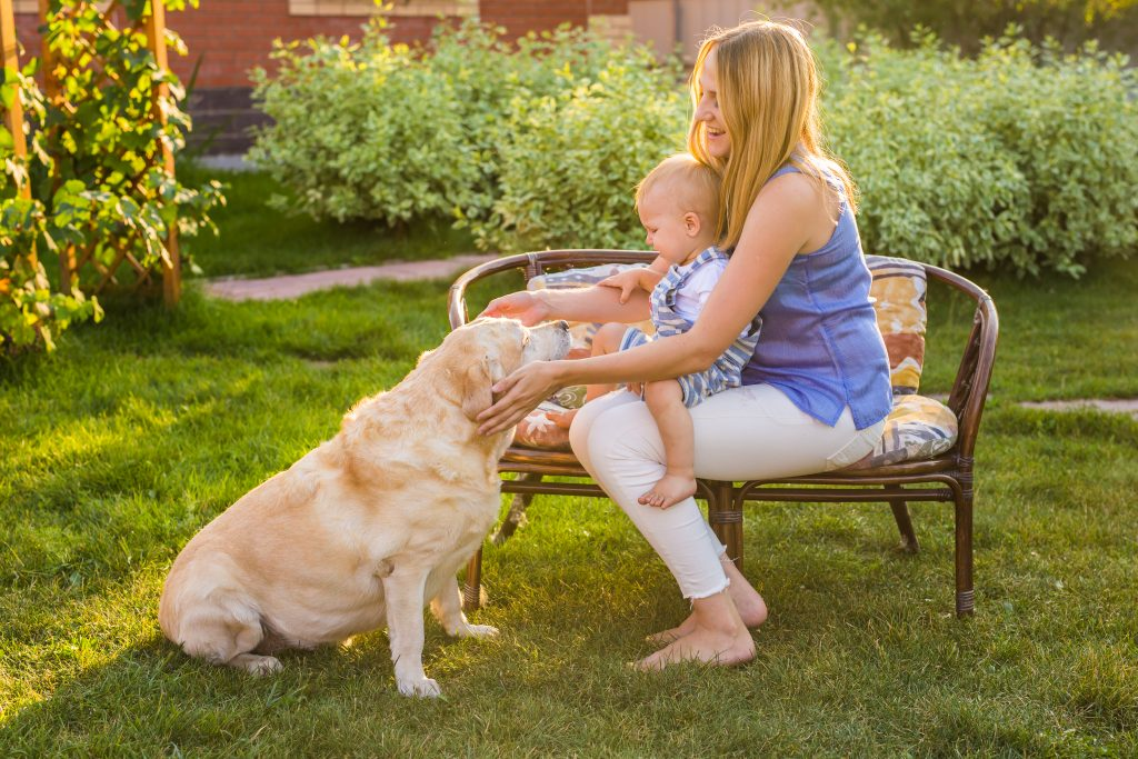 understanding dog body language