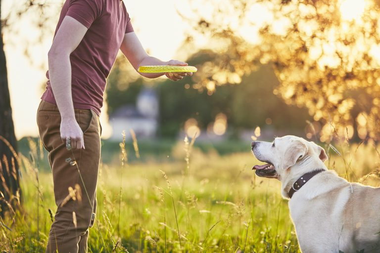 How To Fit In Dog Exercise If You Work Full-Time ?