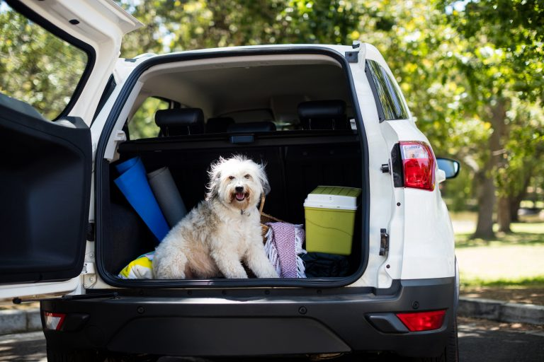 Traveling With Your Dog by car