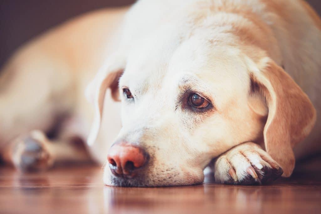 Why does my dog look sad?