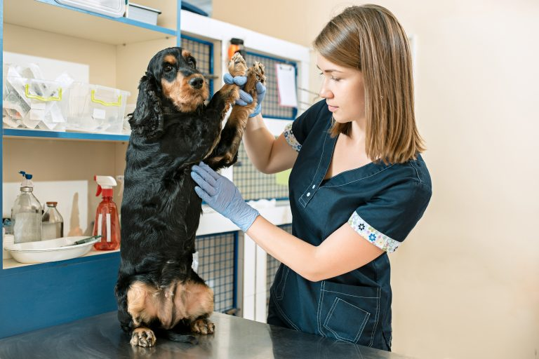 Traveling With Your Dog? Vet Check