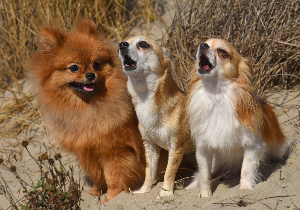 Translating Woofs to Words