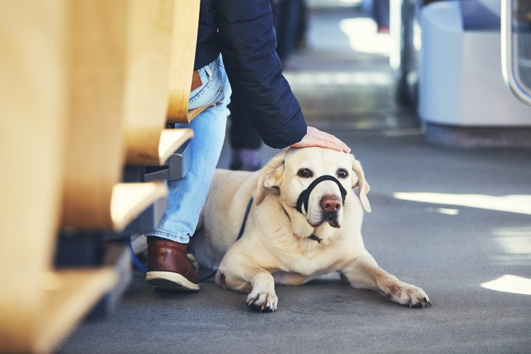 Traveling With Your Dog by bus