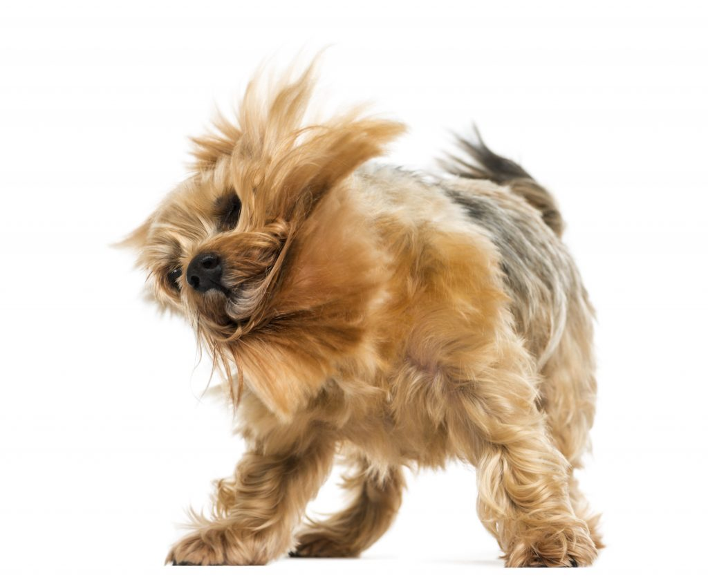 dog Body Posture and Movement
