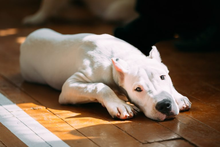 essential oils for dog muscle aches