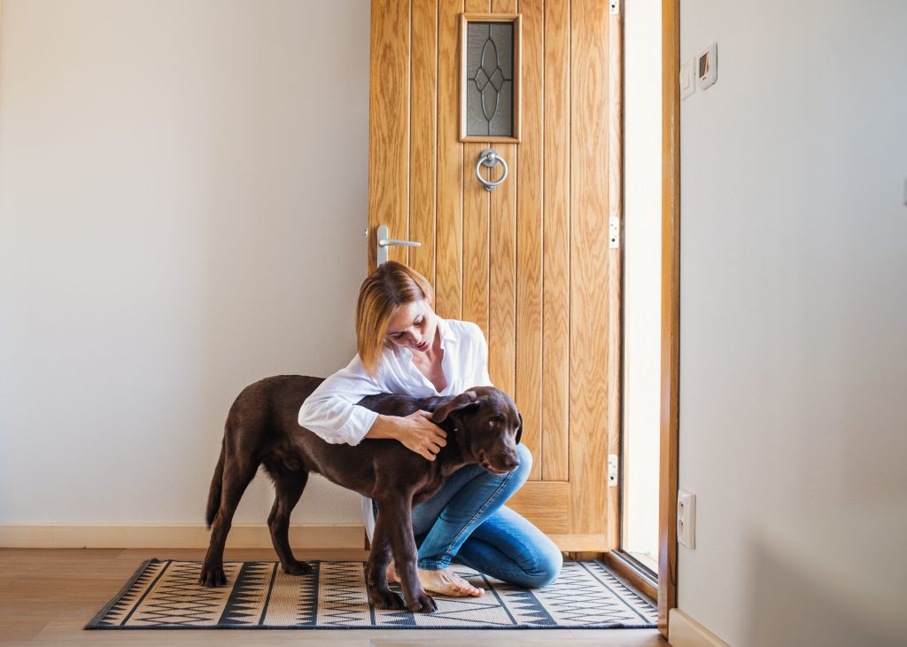 Why Do Some Dogs Develop Separation Anxiety?
