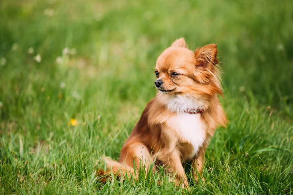 our thoughts on cbd oil for dogs