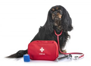 First-Aid For Dogs