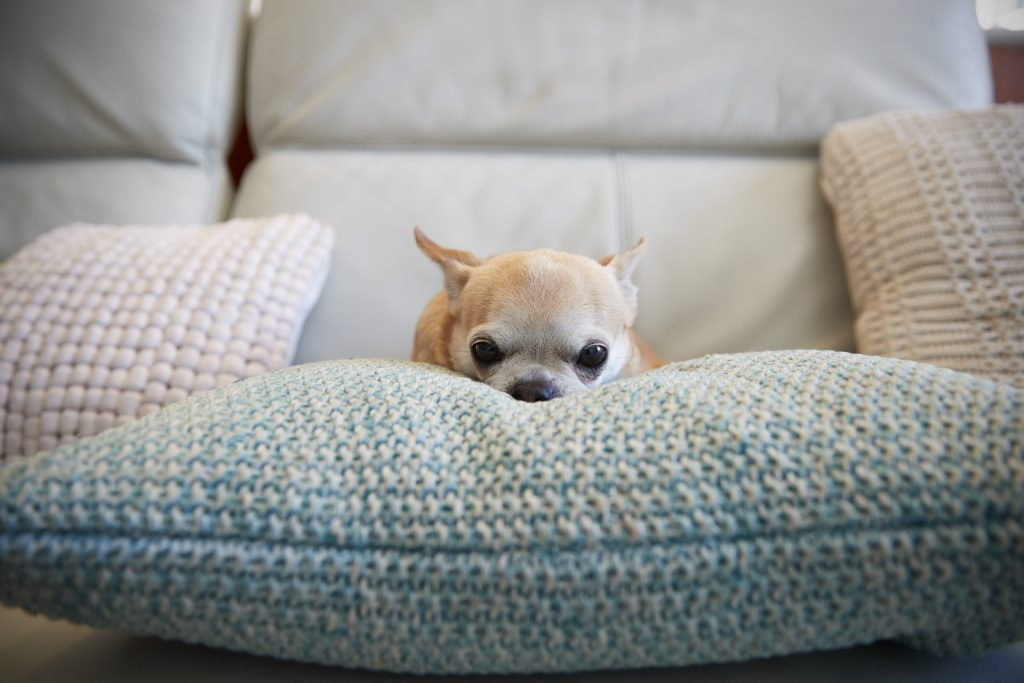 How To Find Your Dog's Threshold For Separation