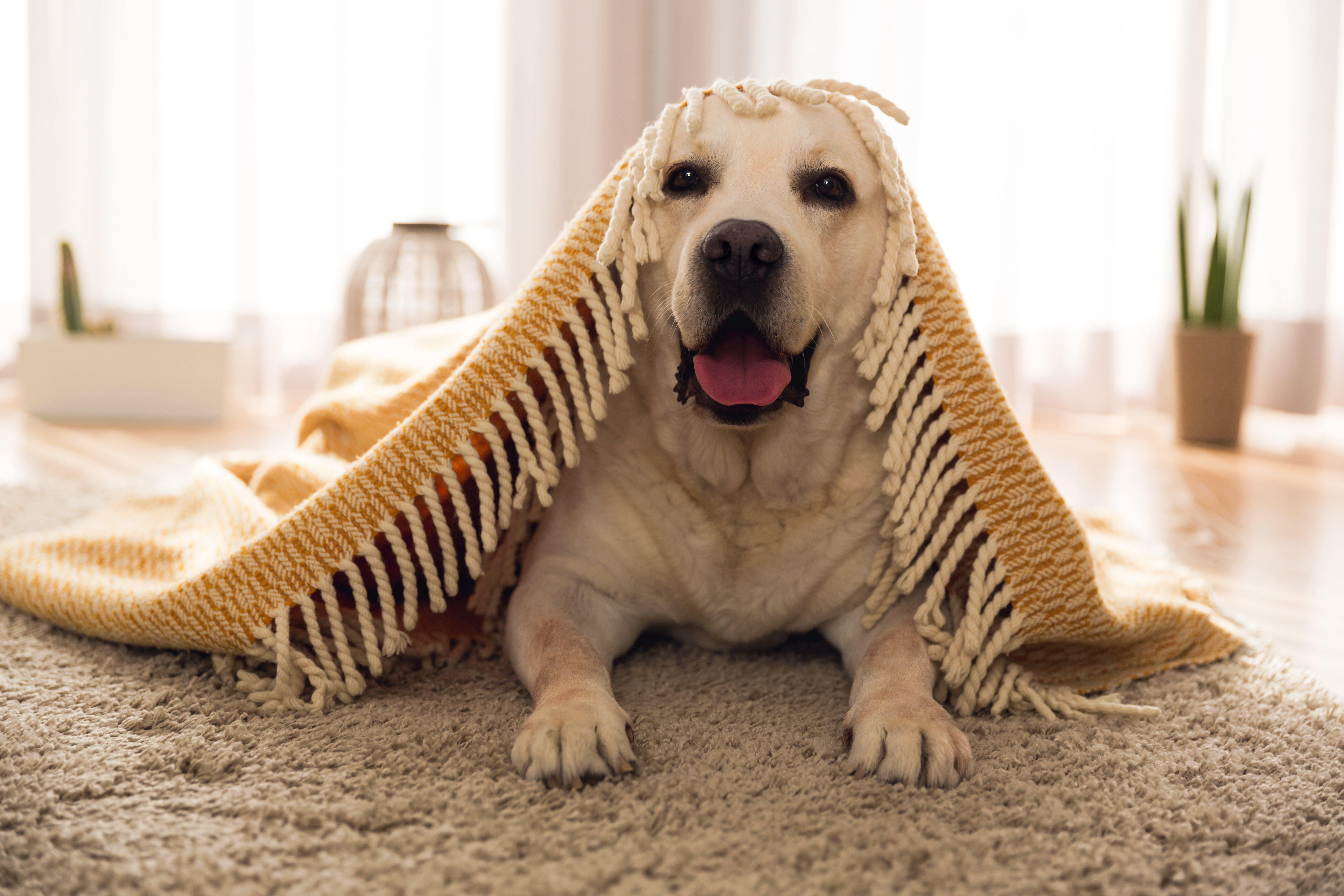 The Best Cordless Vacuums for Pet Hair
