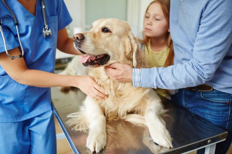 Understanding Canine Joint Pain and Arthritis