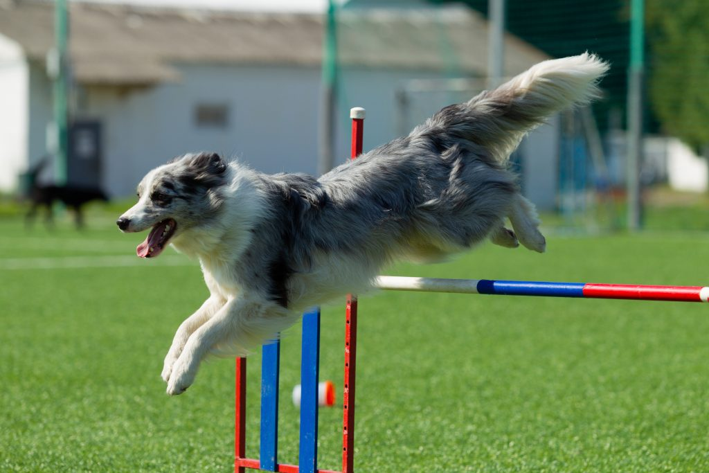 Dog Names Inspired by Athletes