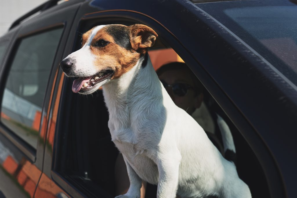 Dog Names Inspired by Cars