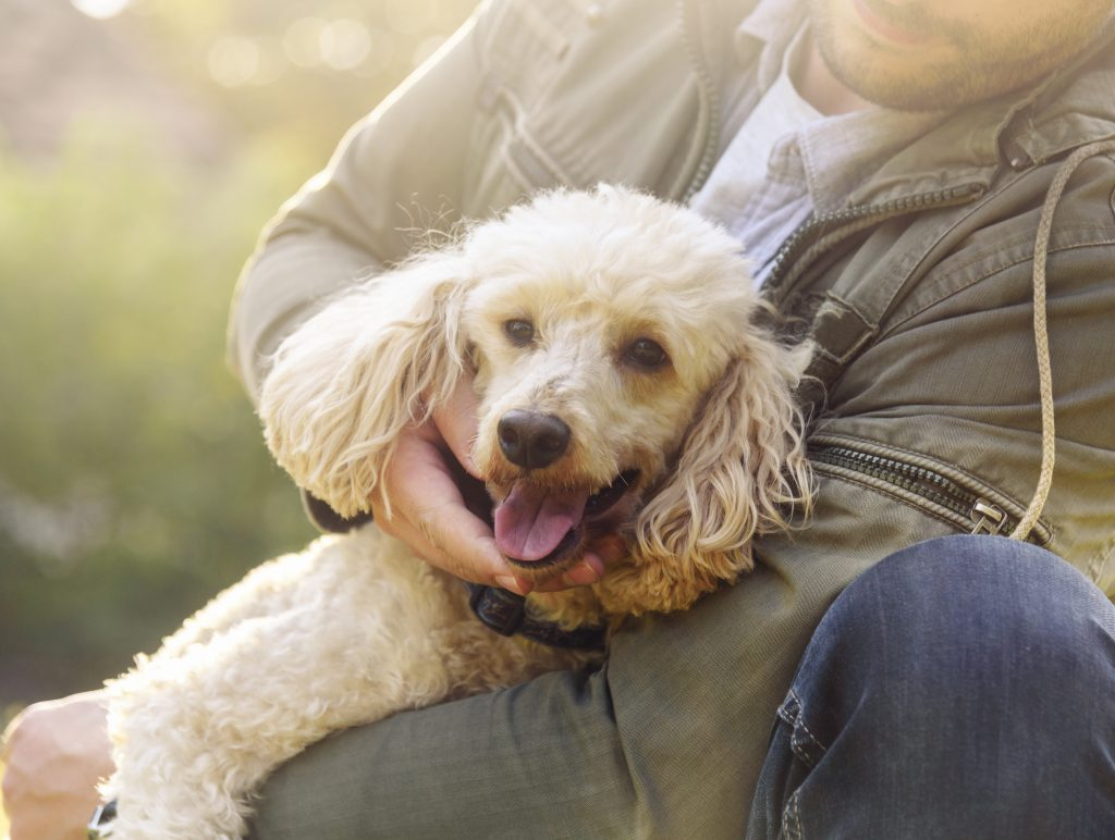 How To Prevent Separation Anxiety in Dogs ?