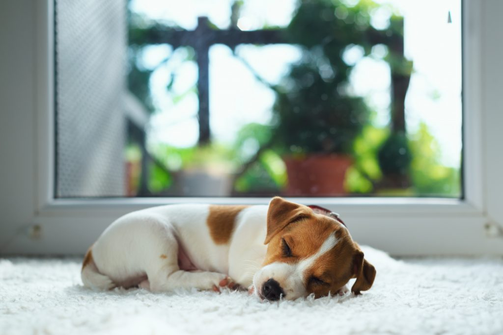 What You Should Do If Your Dog Has Separation Anxiety