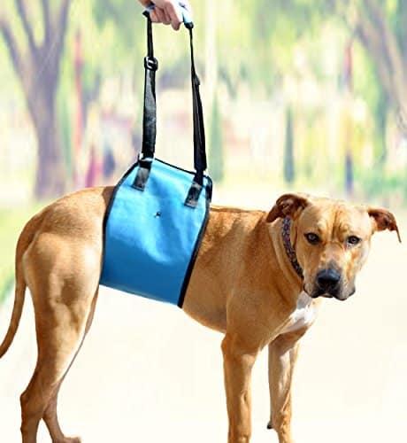 AMZpets Dog Lift Harness