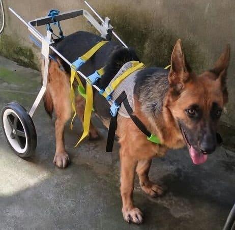 Adjustable Dog Pet Wheelchair, Hind Legs Rehabilitation, 7 Sizes (0-110lbs)