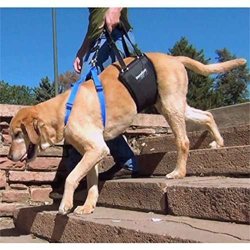 GingerLead Pet Support Rehabilitation Harnesses