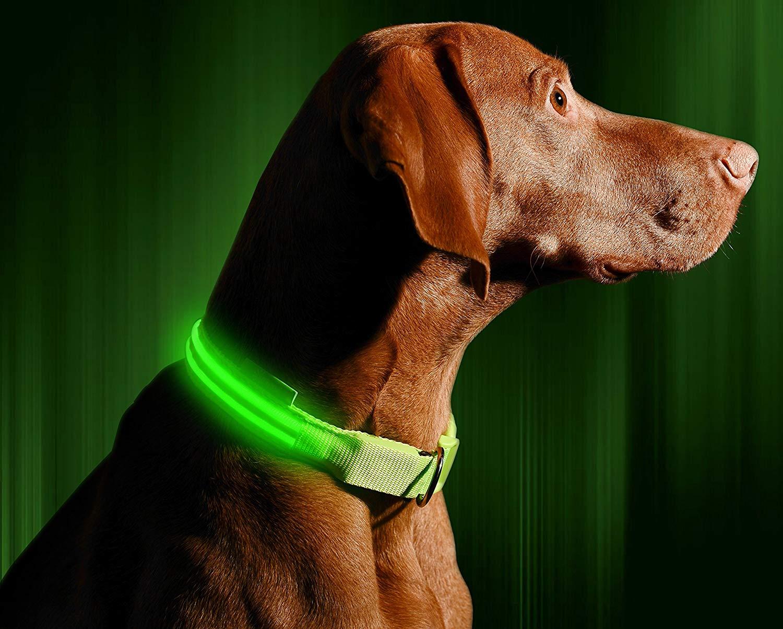 Glow In The Dark LED Dog Collar