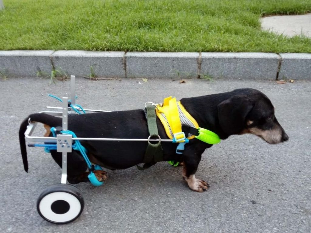 Newlife Mobility Adjustable Dog Wheelchair for long body-short legs
