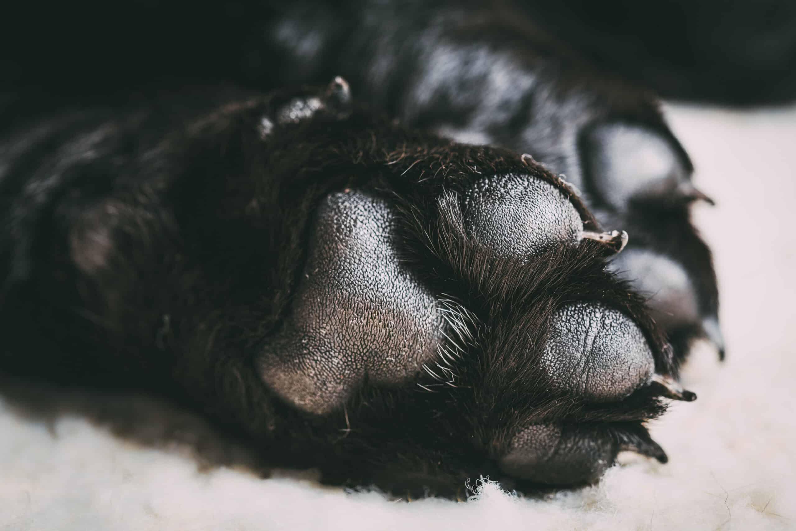 Best Dog Paw Washer