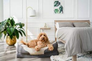 BarksBar Gray Orthopedic Dog Bed - Snuggly Sleeper - with Grooved Orthopedic Foam
