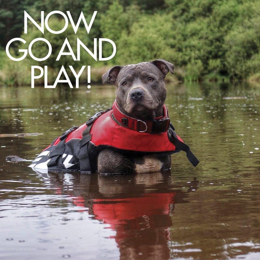 EzyDog Premium Doggy Flotation Device (DFD) - Adjustable Dog Life Jacket