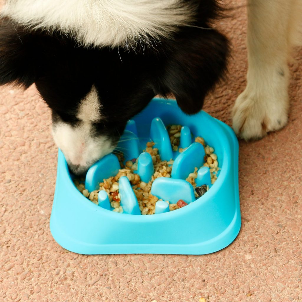JASGOOD Dog Feeder Slow Eating Pet Bowl Eco-Friendly