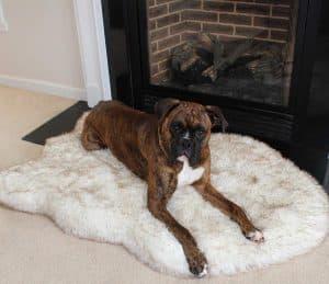 Treat A Dog PupRug Faux Fur Memory Foam Orthopedic Dog Bed