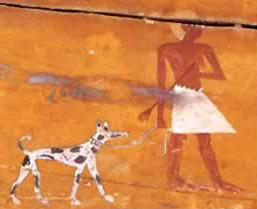 Dogs in Egypt