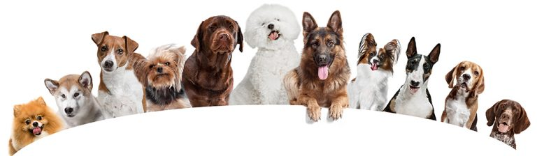Evolution of Dog Breeds and Their Places of Origin