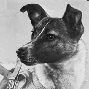 Laika's Legacy