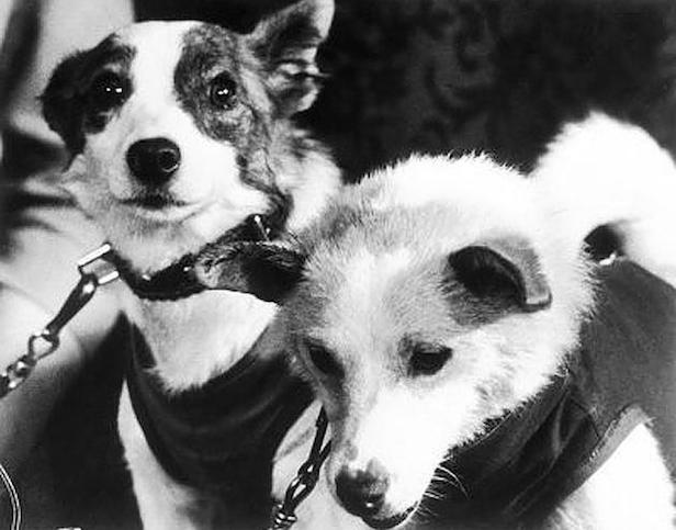 Why Did the Soviets Choose Laika? Mushka and Albina