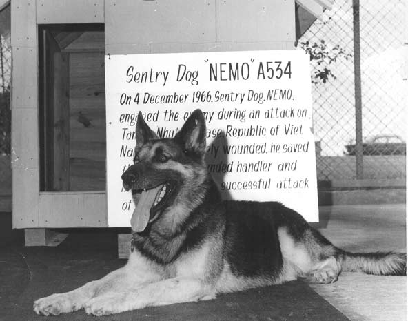 Nemo, a German Shepherd