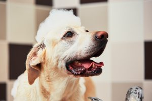 best waterless dog shampoo