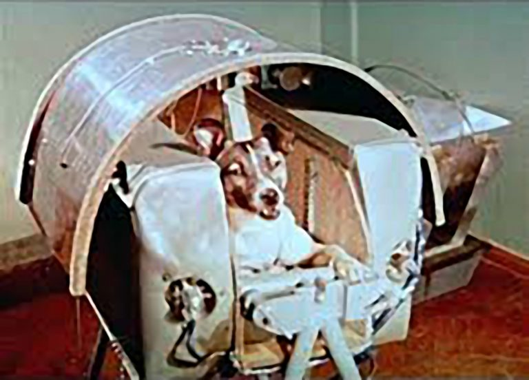 Laika the first dog in space