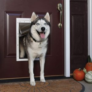 best dog door for cold weather