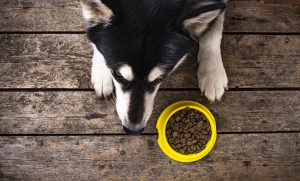 best dog food for sensitive stomach and diarrhea