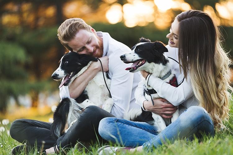 dog dander - dog allergies guide