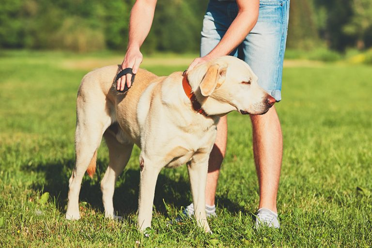 reduce dog dander
