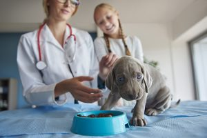 Best Dog Food For Hypothyroidism