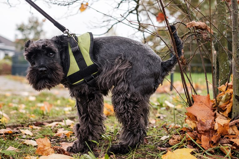 Dog Poop DNA Testing