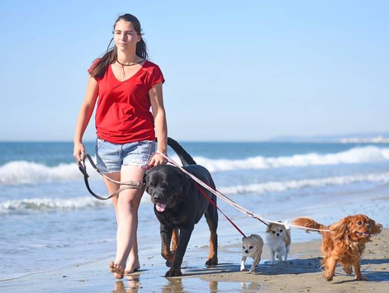 Dogs Improve Mindfulness
