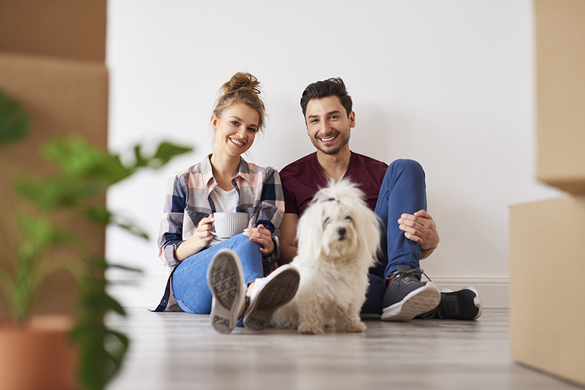 Introduce Your Dog To Their New Home