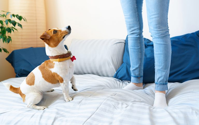 Research Pet-Friendly Hotels
