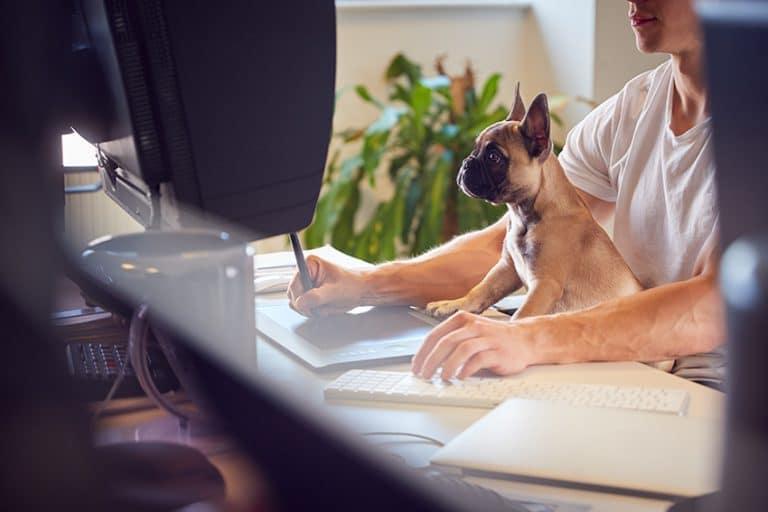benefits of having a dog - For Entrepreneurs